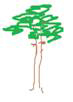 сосной
