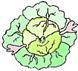 капусту
