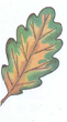 листочке